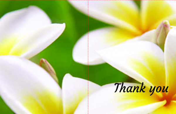 Plumeria thank you cards